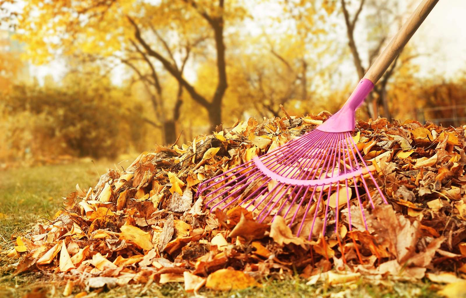 Gartenpflege im Herbst: die wichtigsten Arbeiten