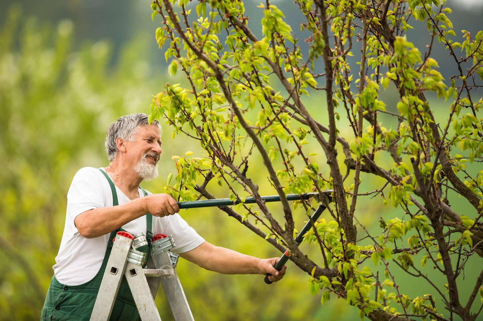 Baumschnitt: Sommerschnitt und Winterschnitt