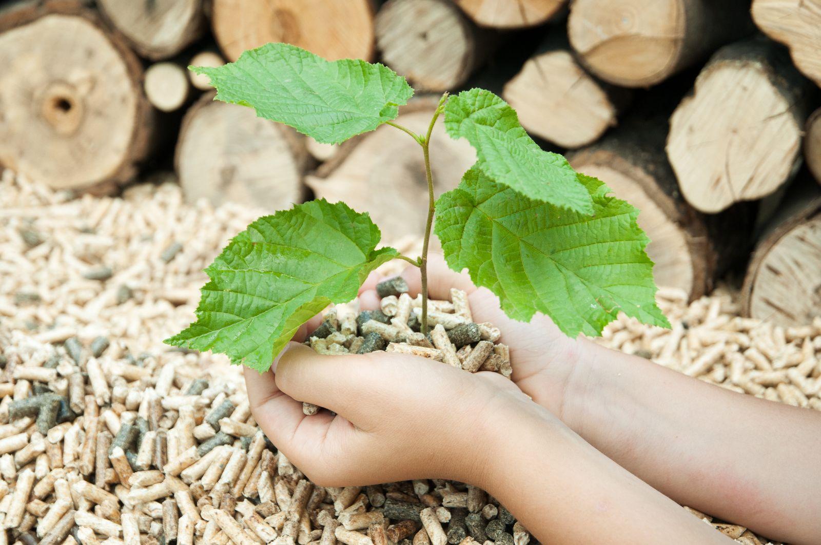 Biomasse: Holzofen, Hackschnitzelheizung und Pelletofen