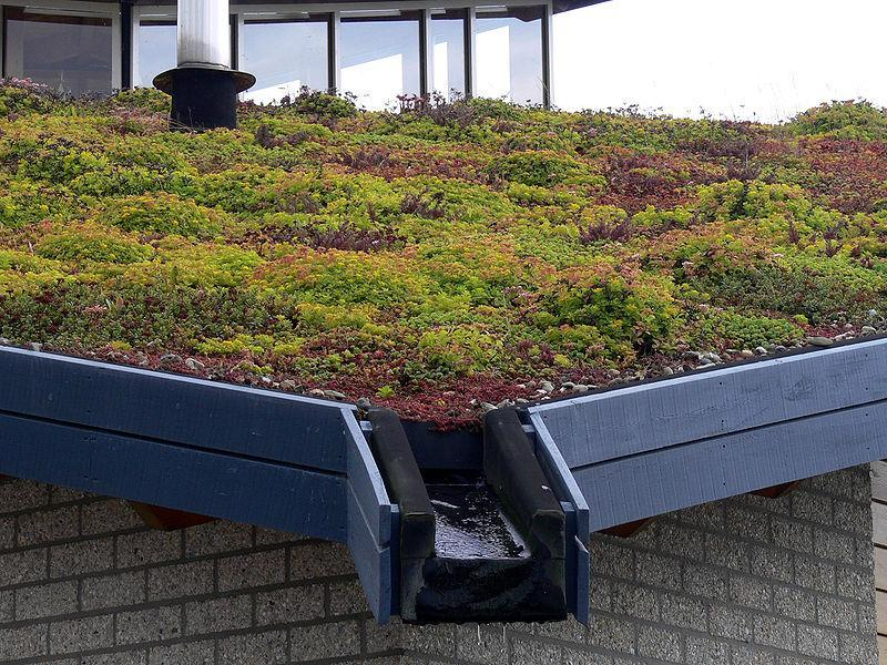Das Grüne Dach und seine Schichten